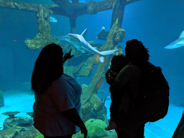 family looking at Shark at aquarium in Las Vegas