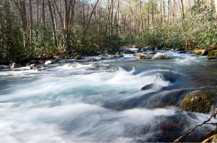 Smoky Mountains with kids: Porter's Creek